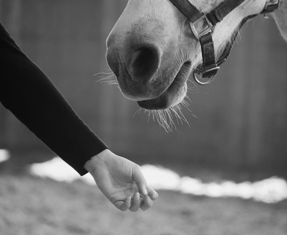 leiderschap paardencoaching