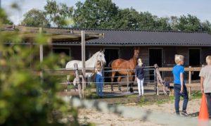 jongeren paardencoaching