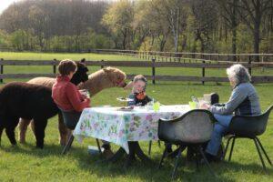 picknick tussen de Alpaca's